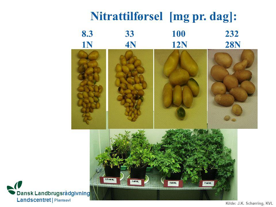 Nitrattilførsel [mg pr. dag]: